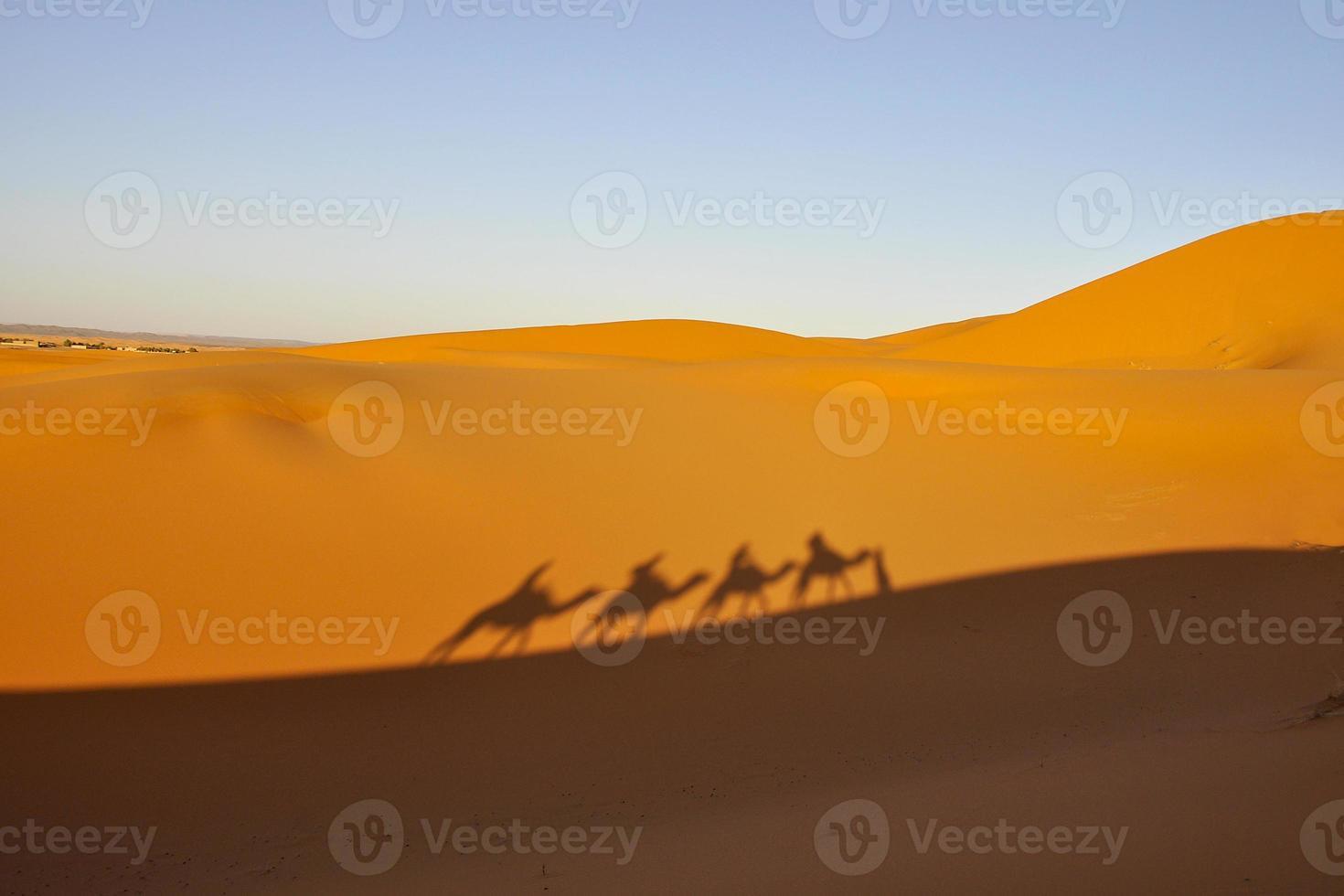 viajantes en camello en el desierto de marruecos - afrika foto
