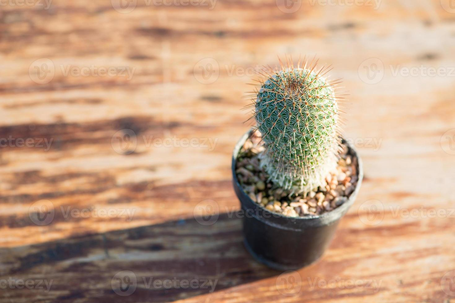 Kaktus im Blumentopf auf Holztisch foto