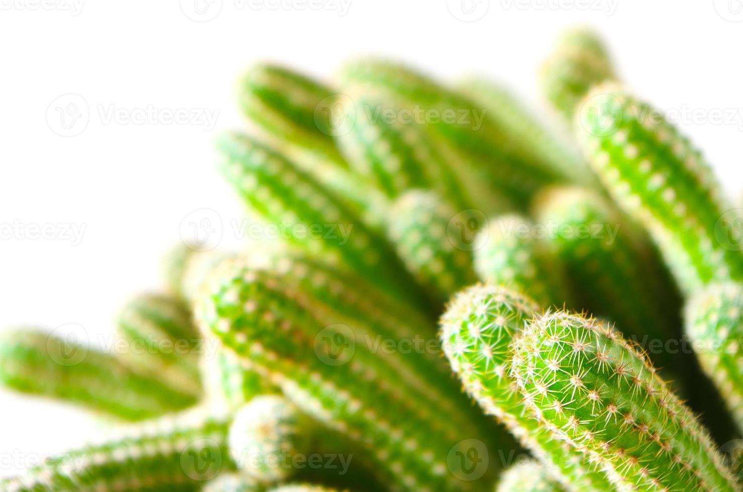 kleiner Kaktus foto