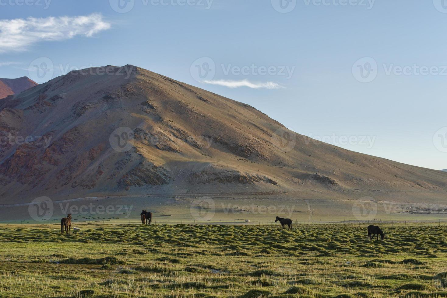 Pferde auf grüner Weide in Bergen foto