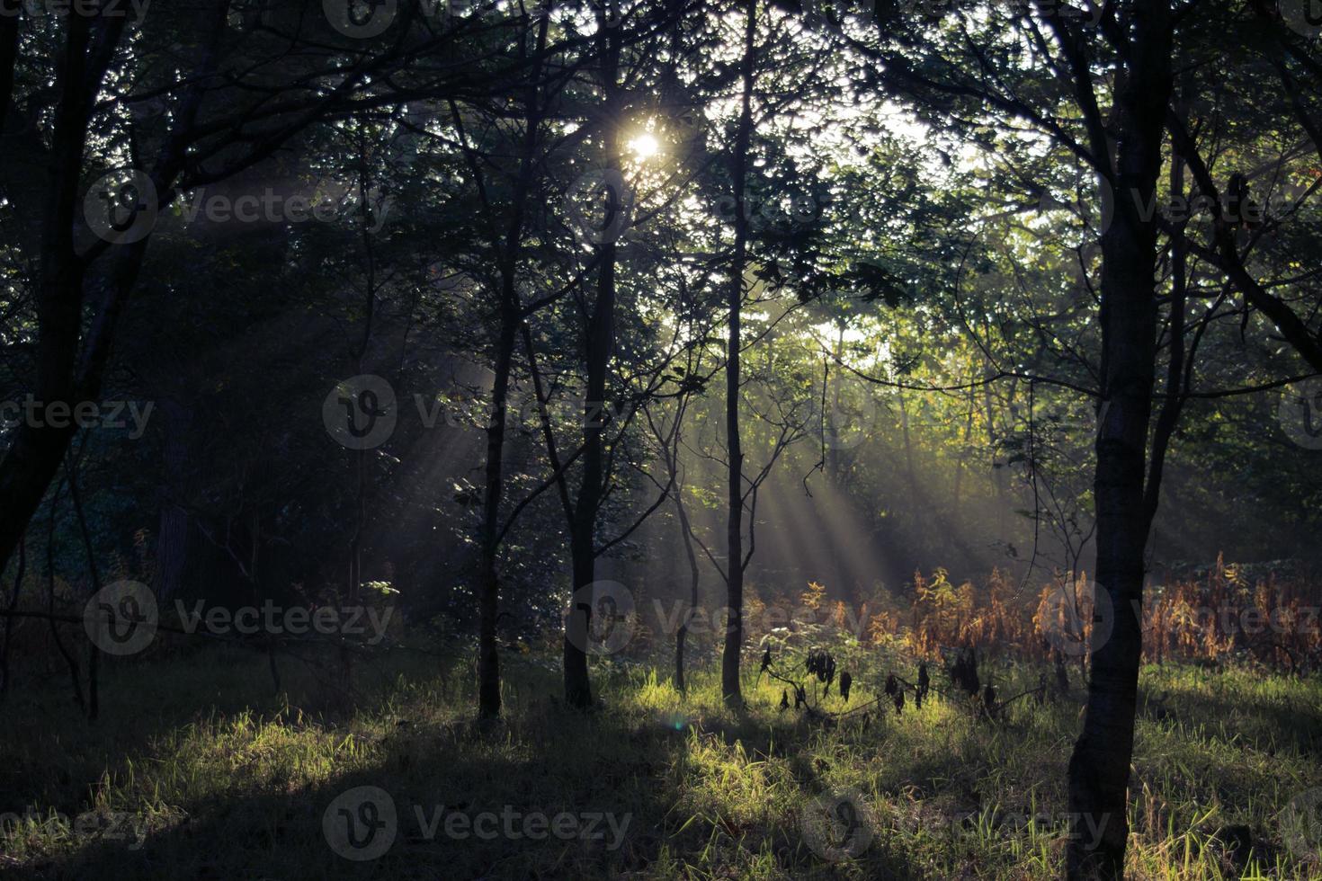 Waldlichtung foto