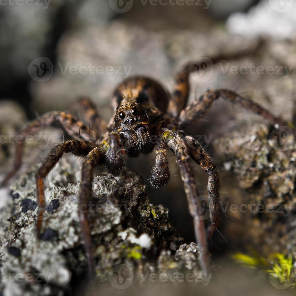 Spinne im Wald foto