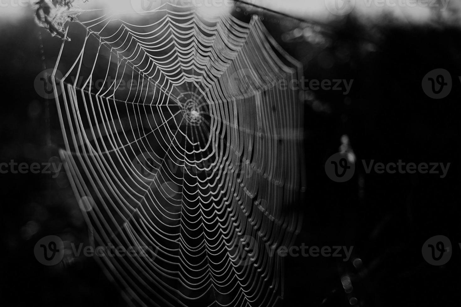 Spinnennetz Tau im Wald foto