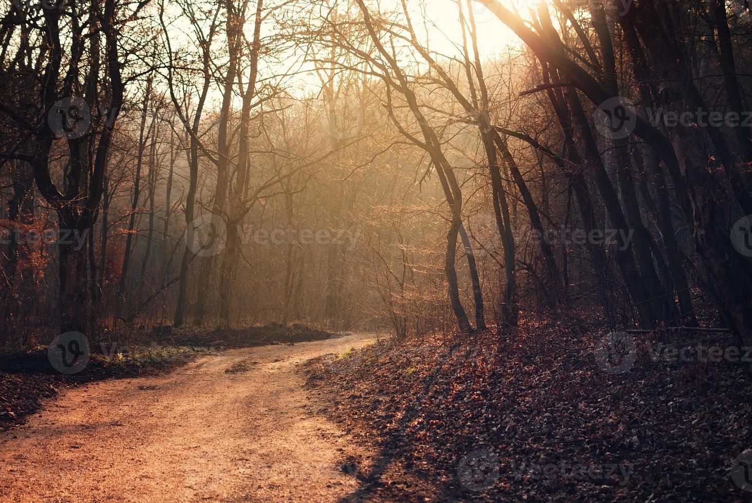 Fußweg im Wald foto