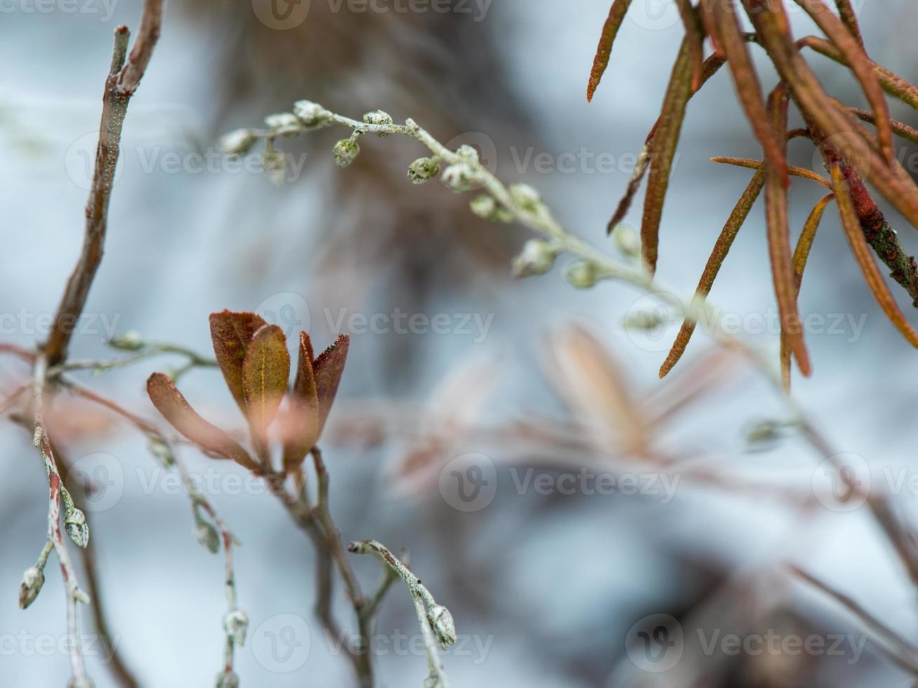 feuchte Pflanzenzweige im Winterwald foto