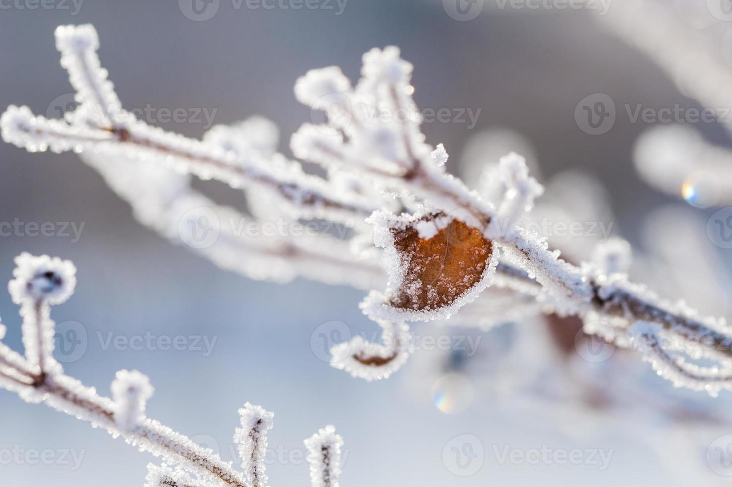 Raureif auf dem Baum im Winterwald foto