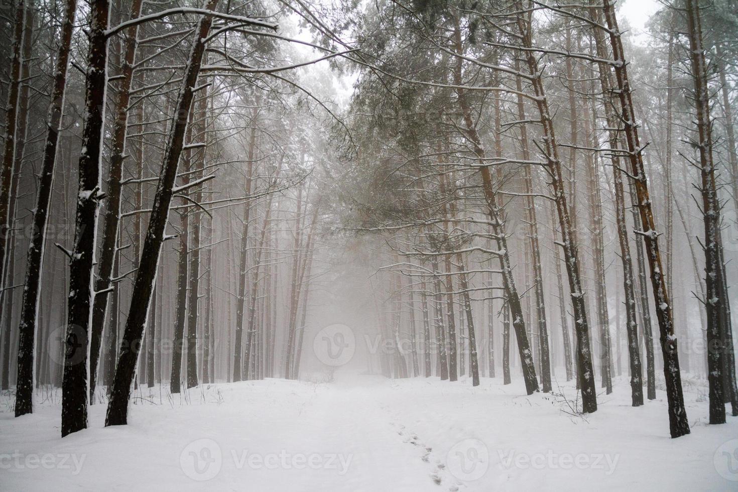 Straße im Winter Nadelwald. foto