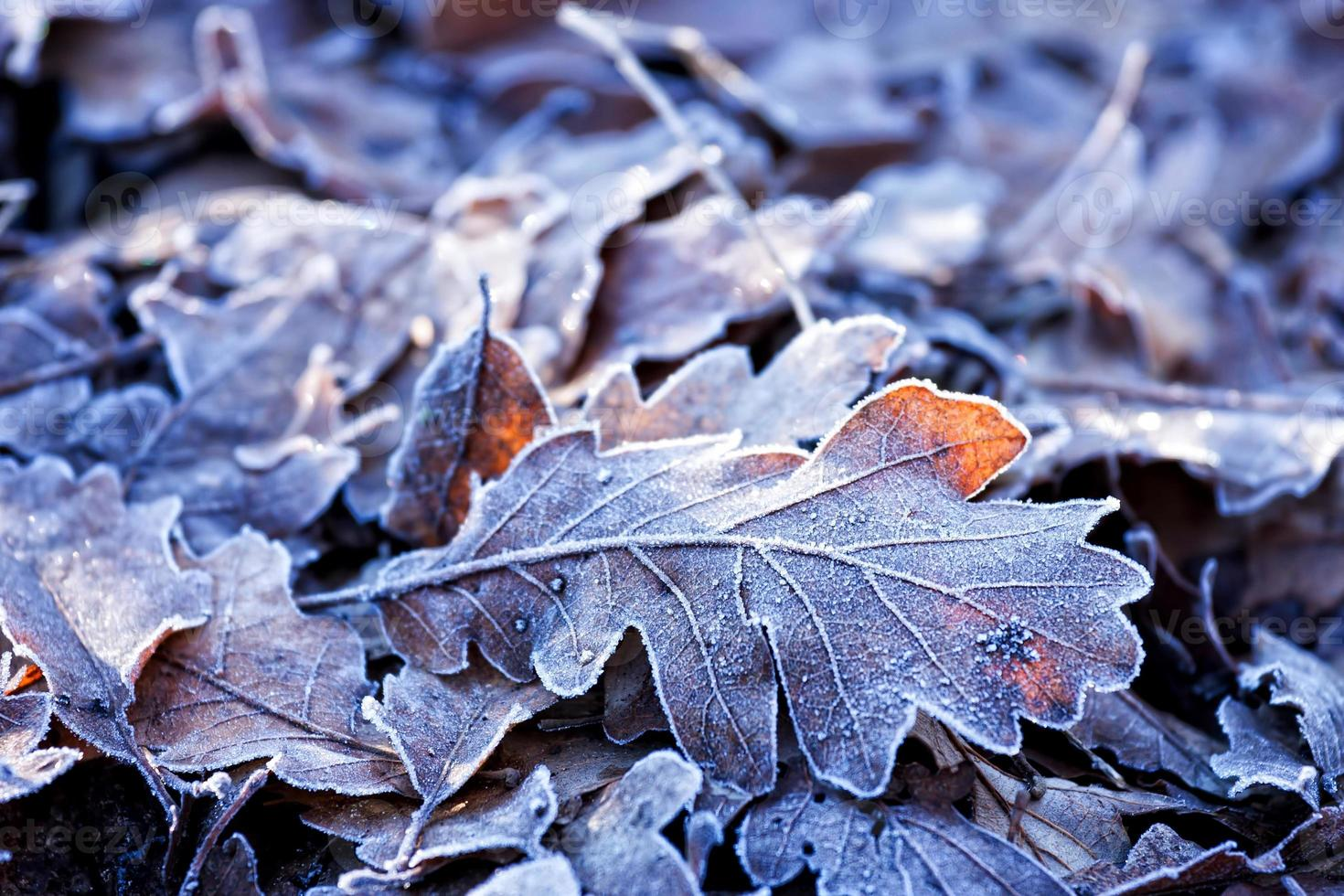 Blätter foto