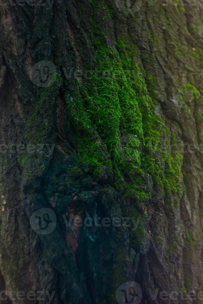 Moos auf Baum foto
