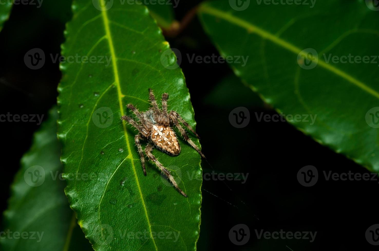 Spinne steht still auf einem Blatt im Wald foto
