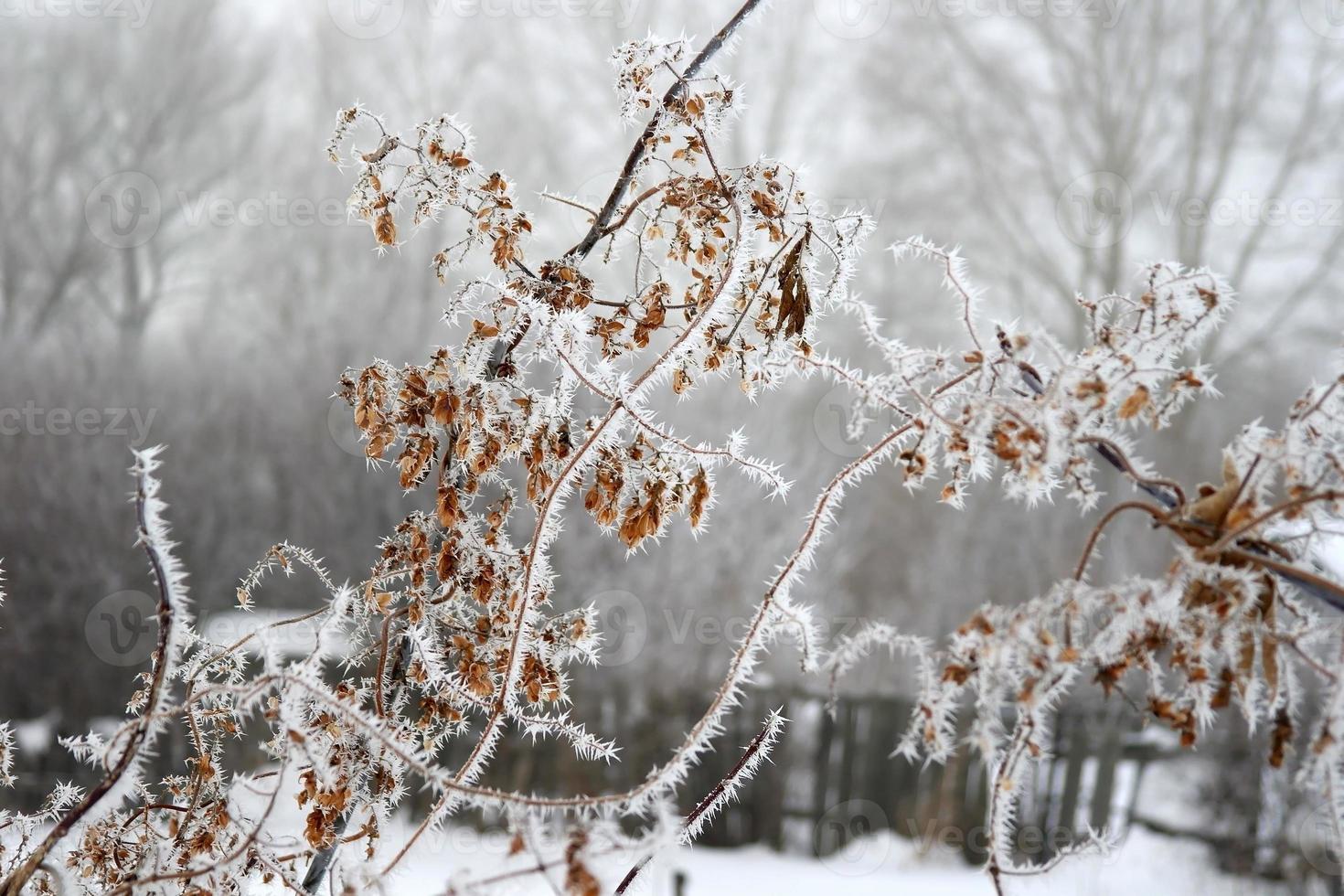 Zweig Baum Raureif bedeckt foto