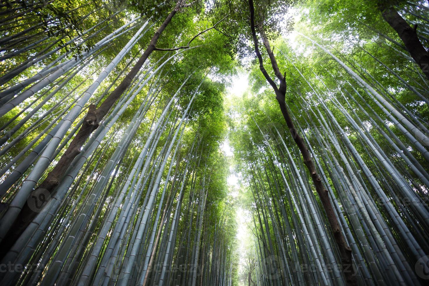 Arashiyama foto