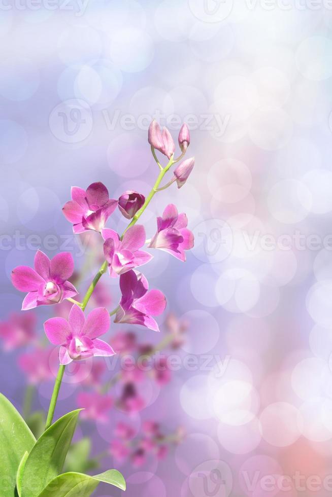 schöne rosa Orchidee im grünen tropischen Waldbokeh foto
