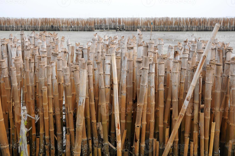Bambuswand foto