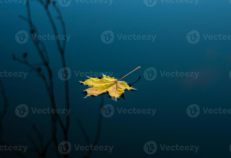 Ahorn gelbes Blatt foto
