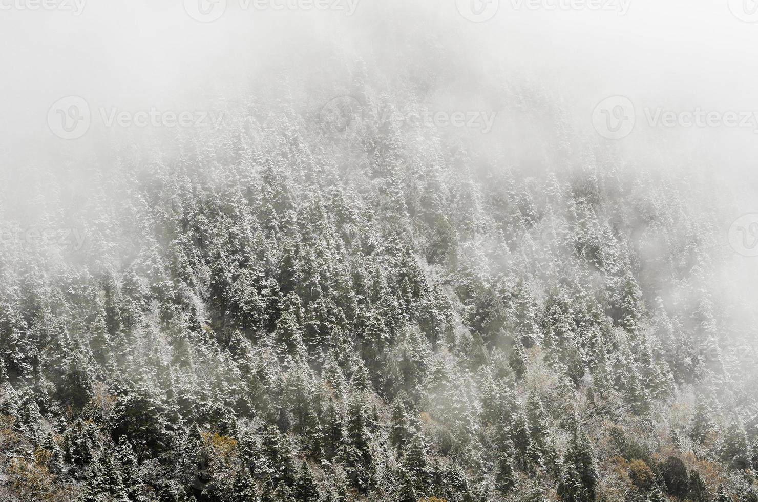 Hochgebirgswald, bedeckt von schneebedecktem Raureif. huanglong, ch foto