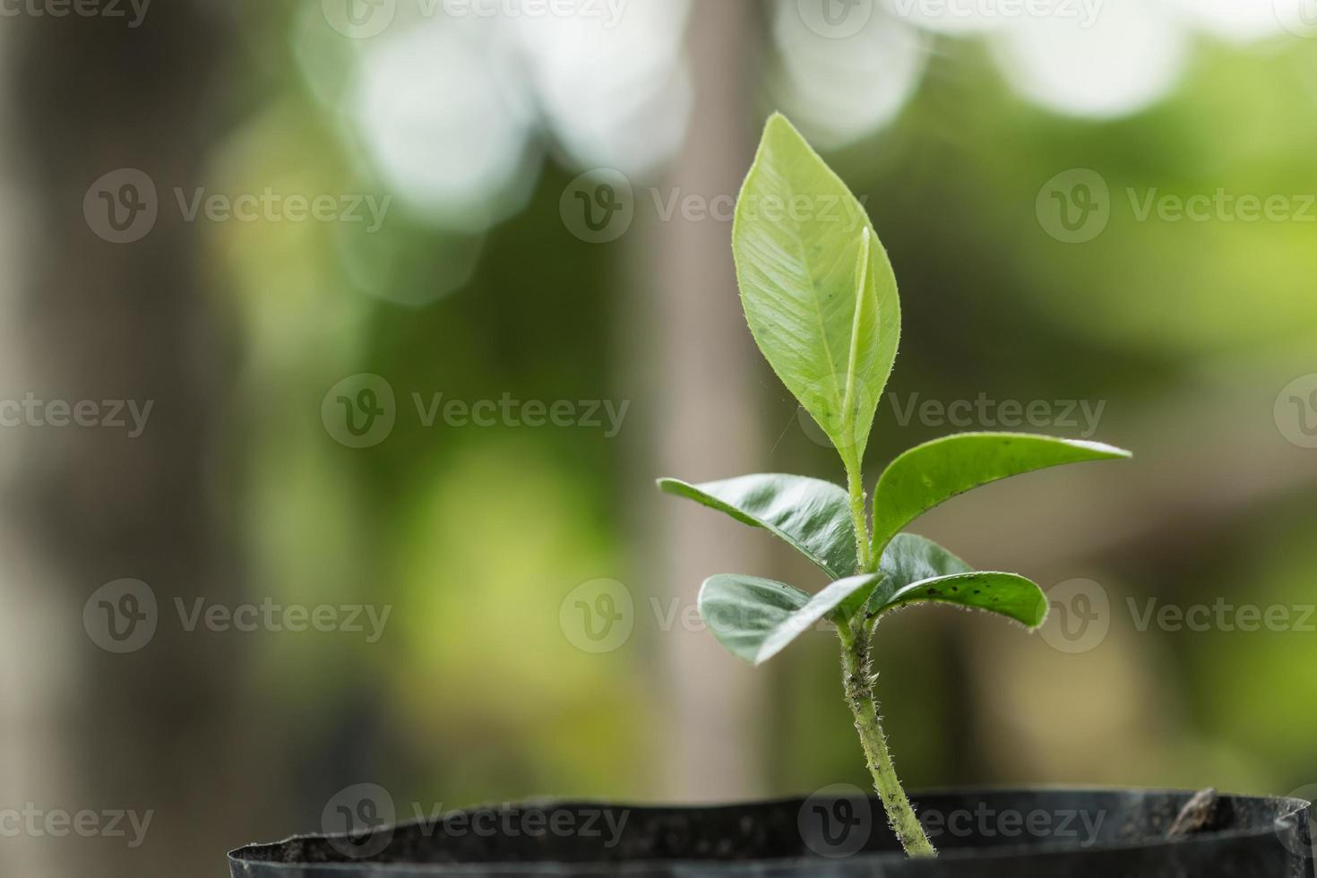 junge Pflanze im Morgenlicht foto