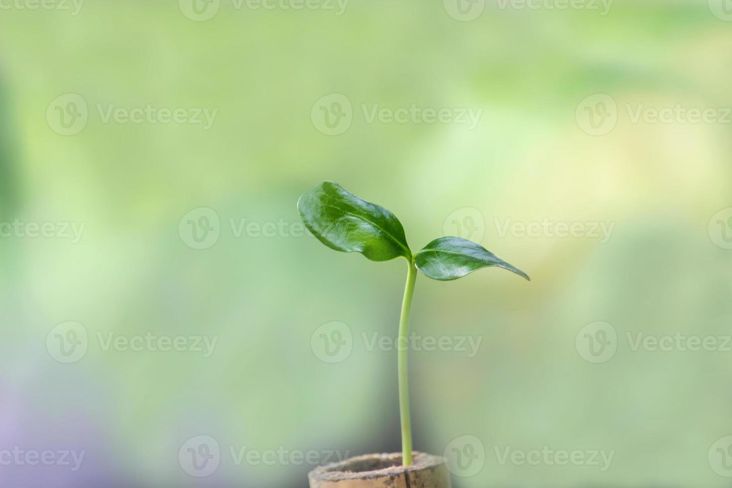 junge Pflanze in Töpfen gezüchtet, um die Umwelt zu schonen foto