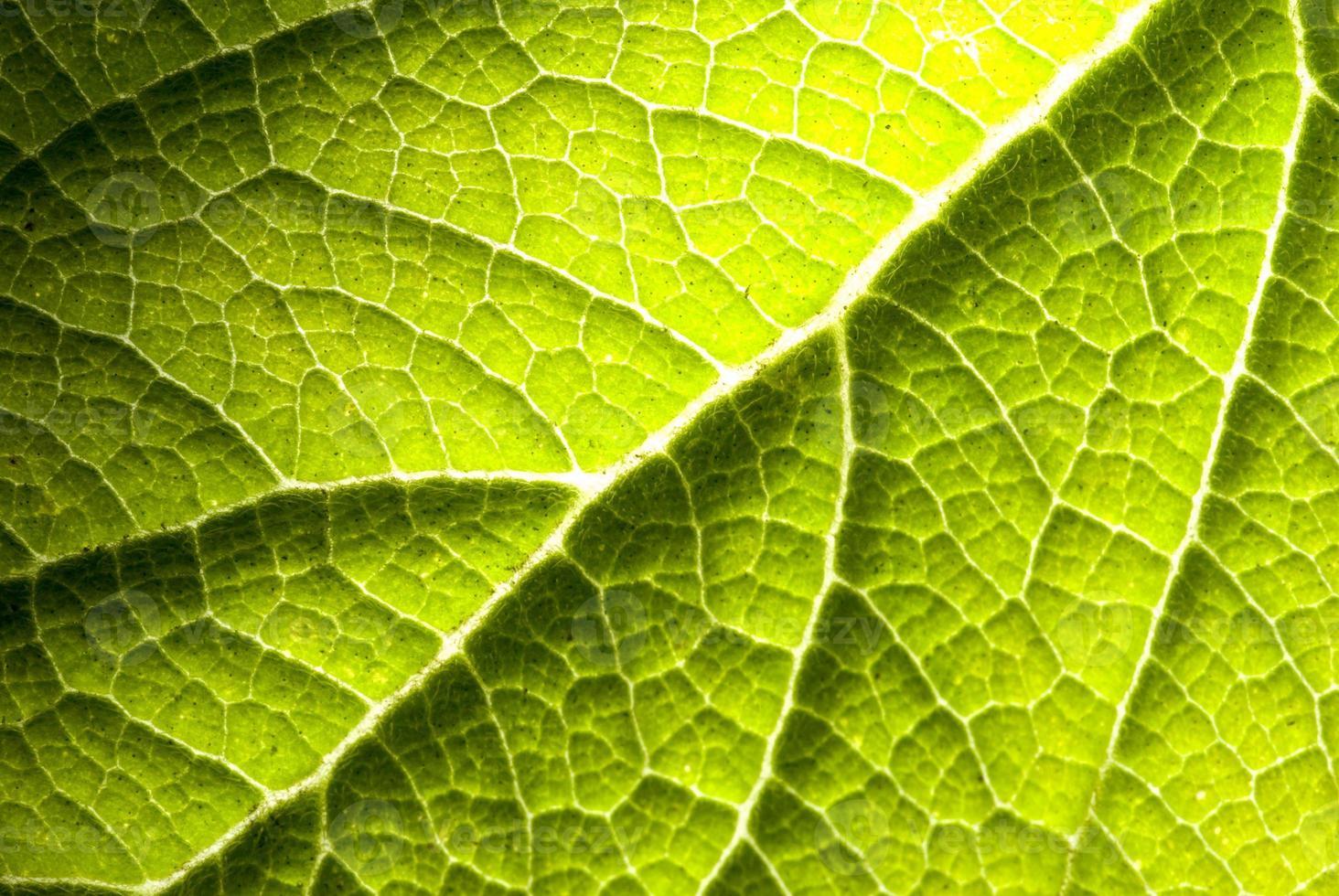 grünes Blatt foto