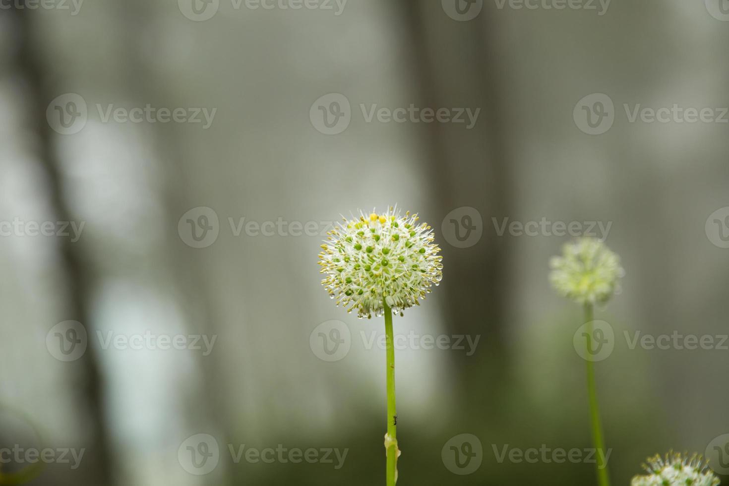 weiße Blumen. foto