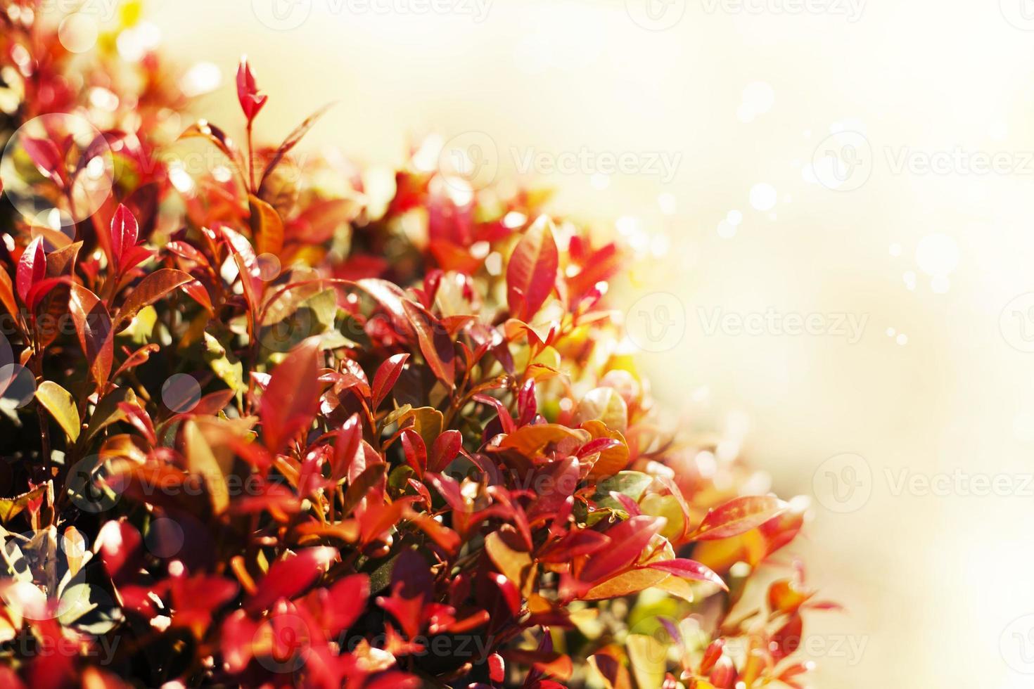 gelber Herbstlaubhintergrund, sehr flacher Fokus, Makrofotografie foto