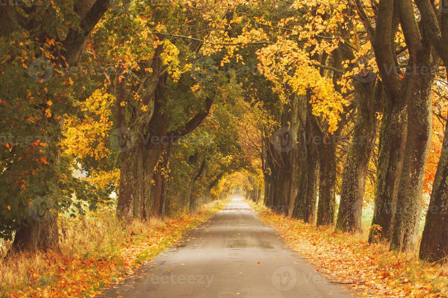 Herbststraße. foto