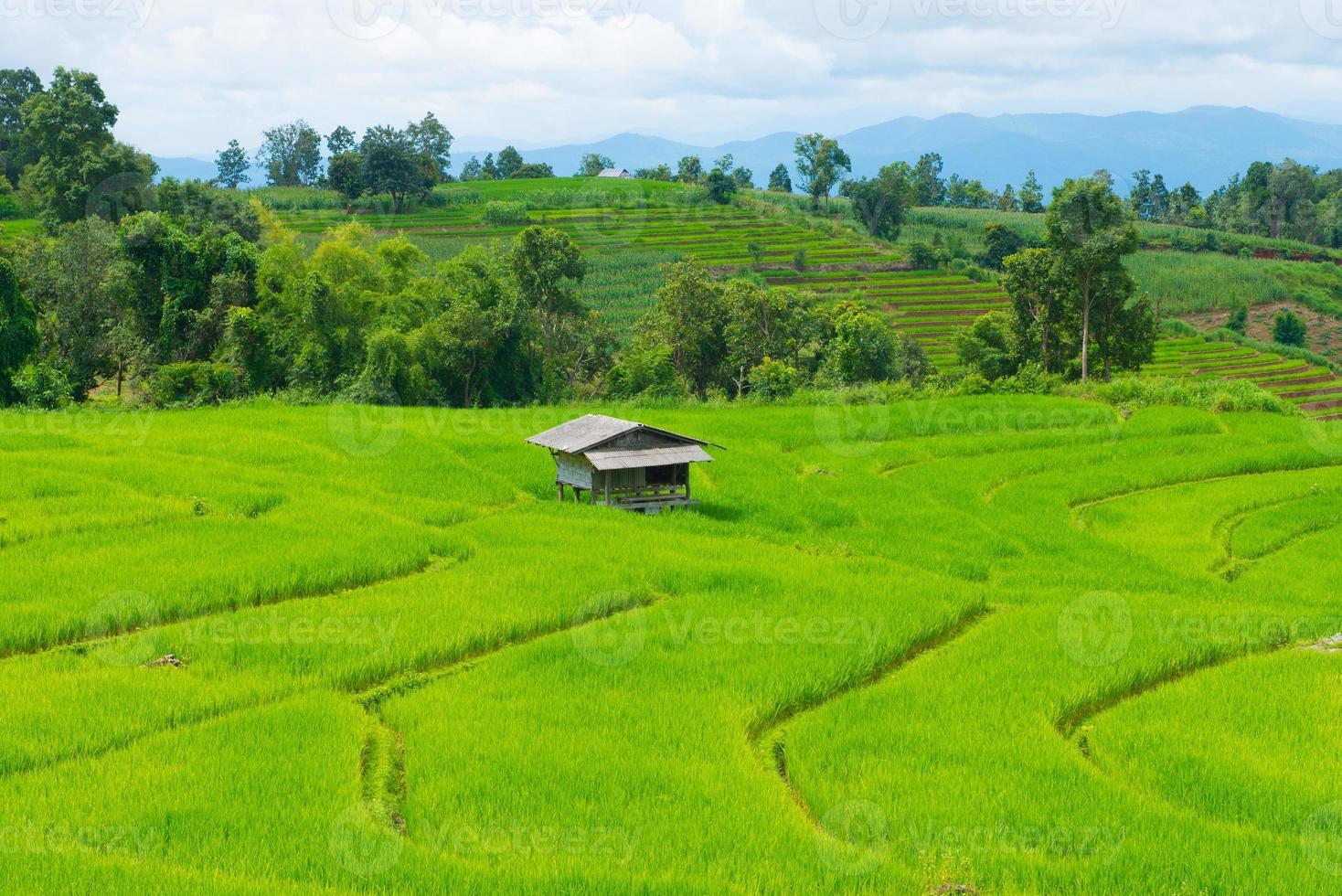 Reisfeld mit Häuschen in Thailand foto