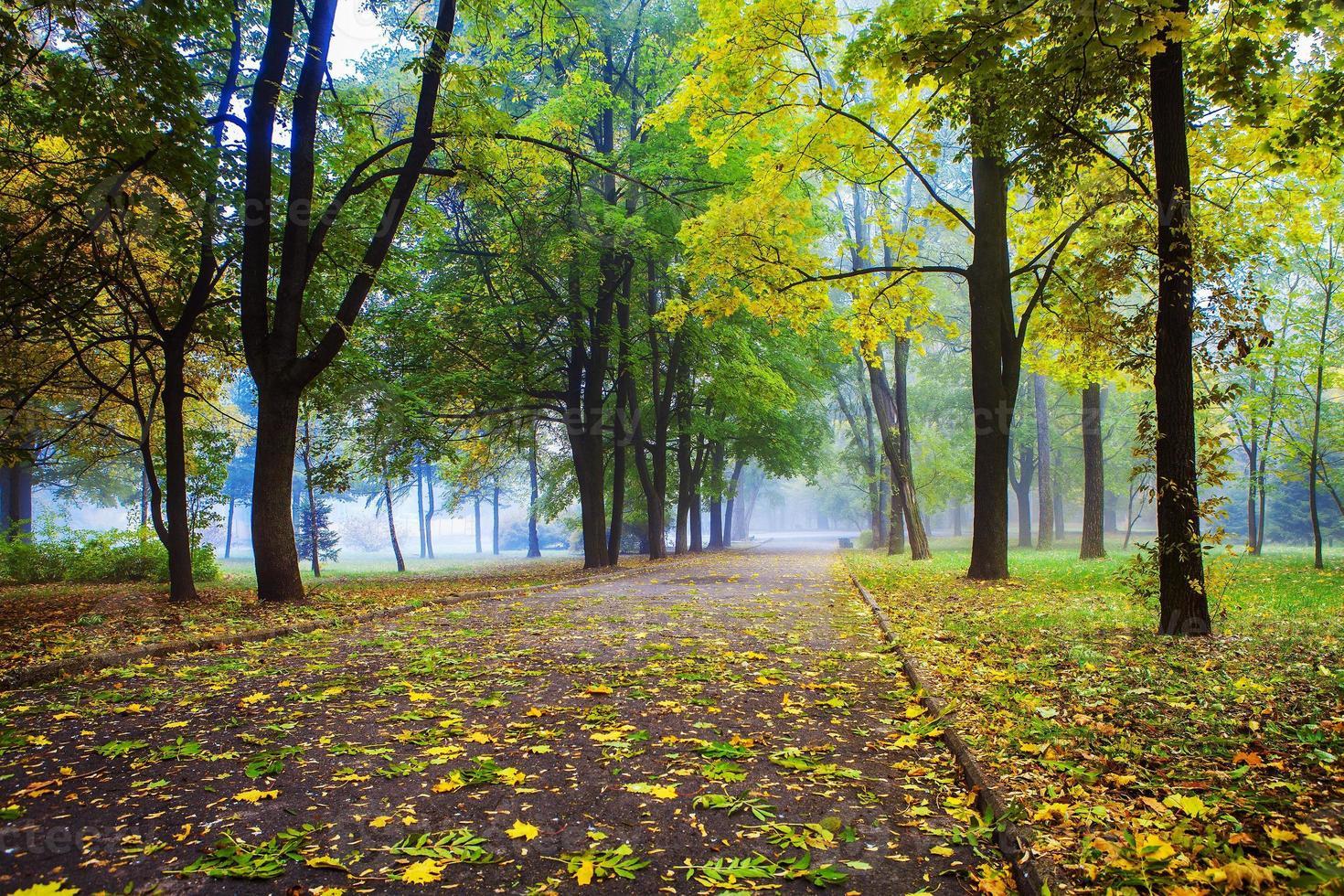 Park foto