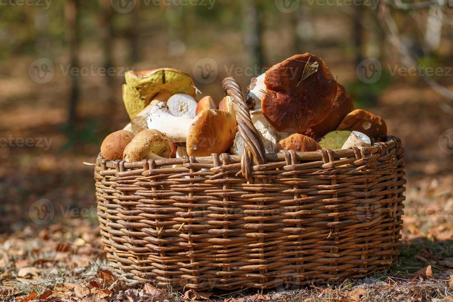Korb mit Pilzen foto