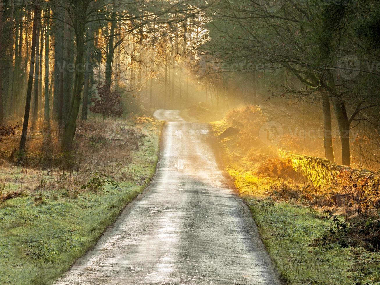 Der Weg nach Hause foto