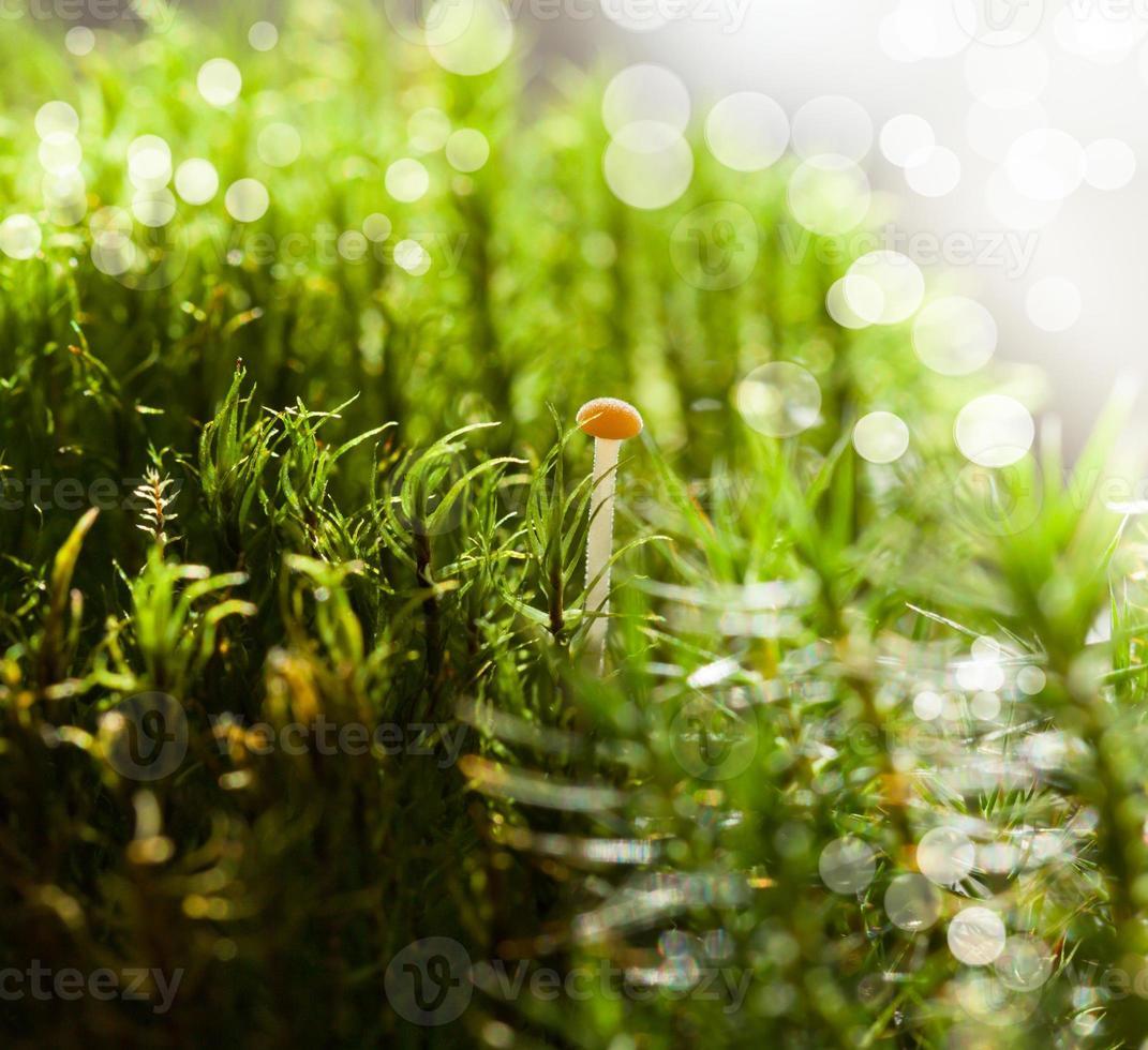 rote Tasse winziger Pilz foto