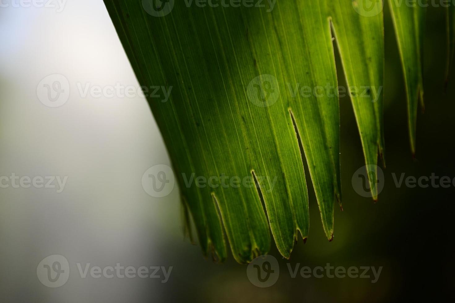 die Pflanze foto