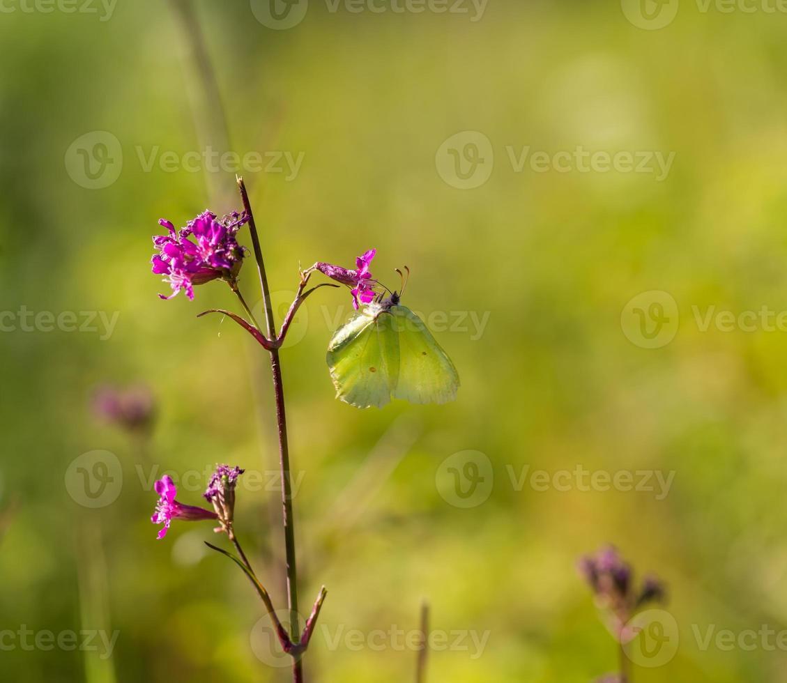 schöner Schmetterling foto