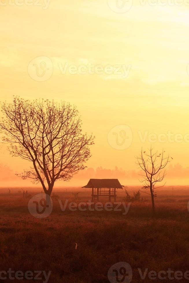 Dorfhaus Feld die Morgensonne in Thailand foto