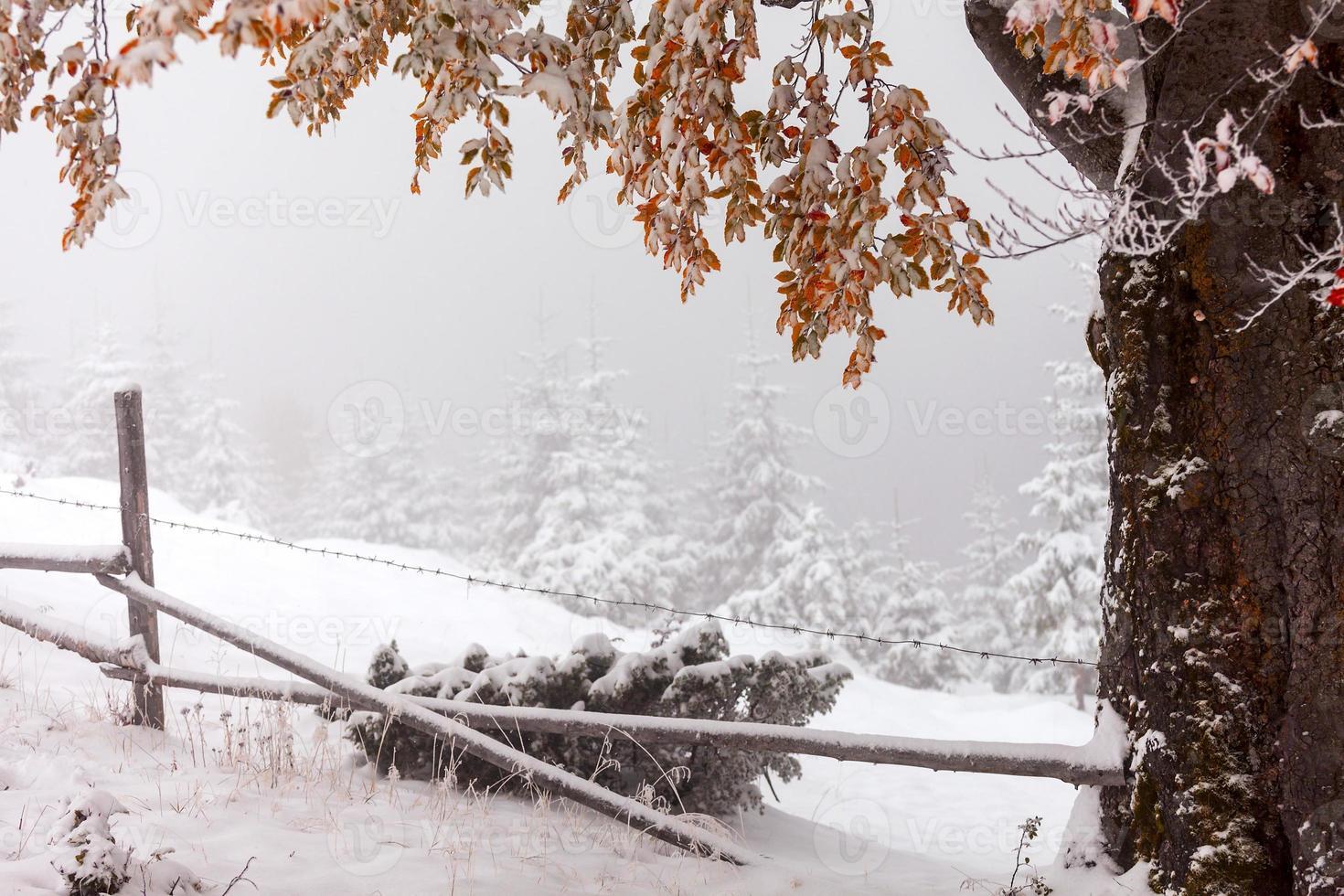 zwei Jahreszeiten - Winter- und Herbstszene im Park foto