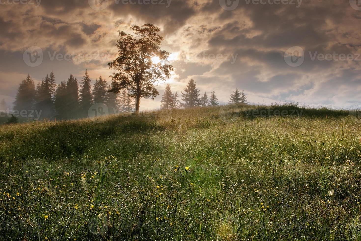 Karpaten. Baum auf einem Berghang mit der Sonne. foto