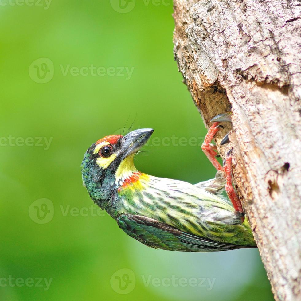 Vogelbabys foto