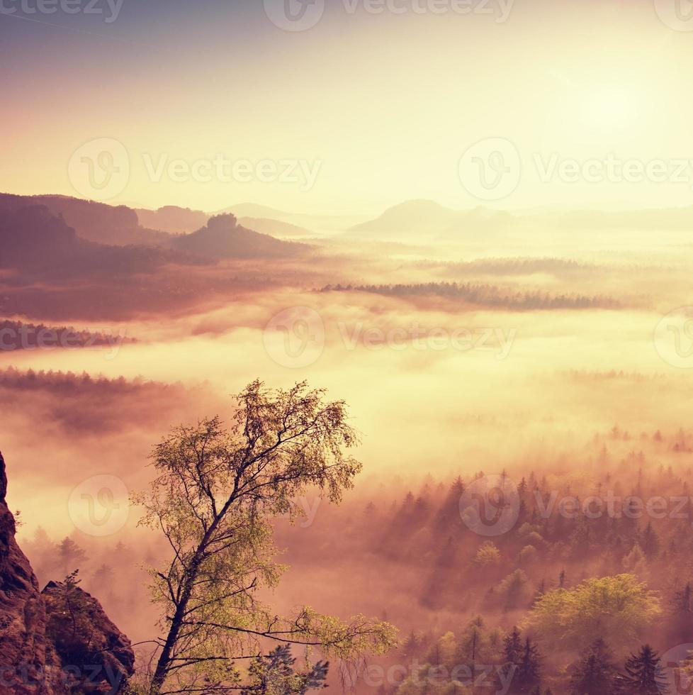 Feen-Tagesanbruch. nebliges Erwachen in wunderschönen Hügeln. foto