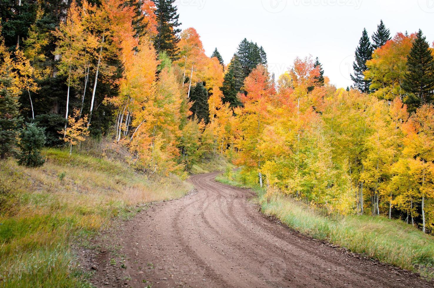 Weg im Herbst foto