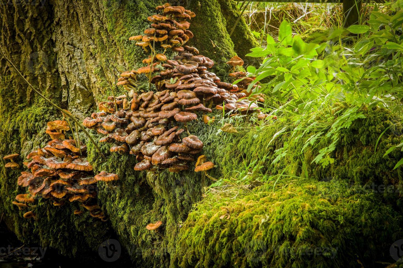 Pilze am Baum foto