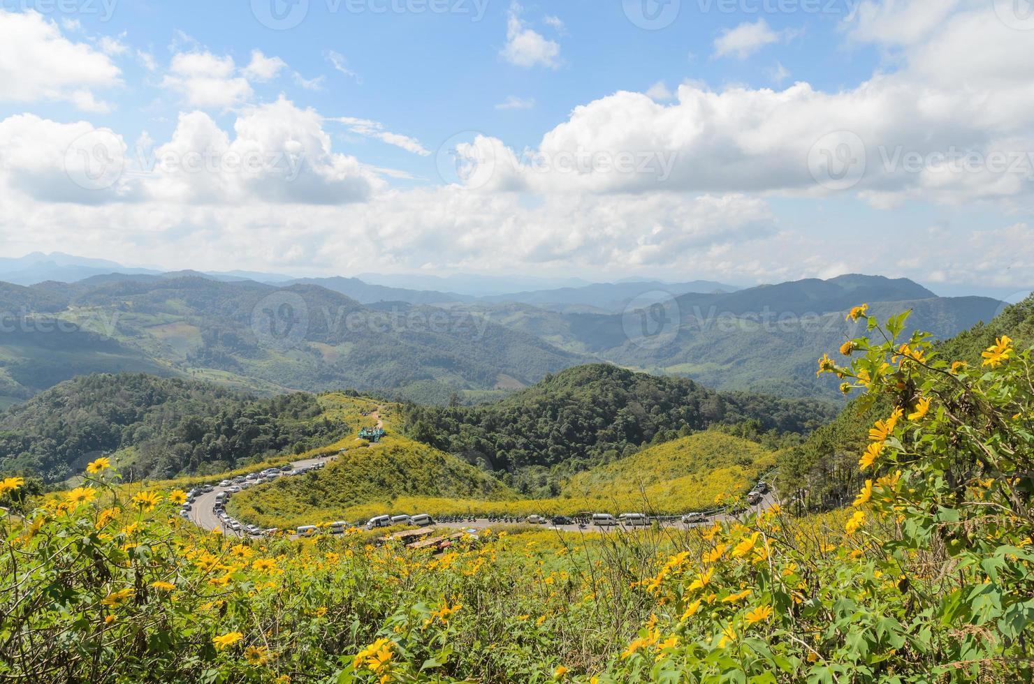 mexikanischer Sonnenblumenberg foto