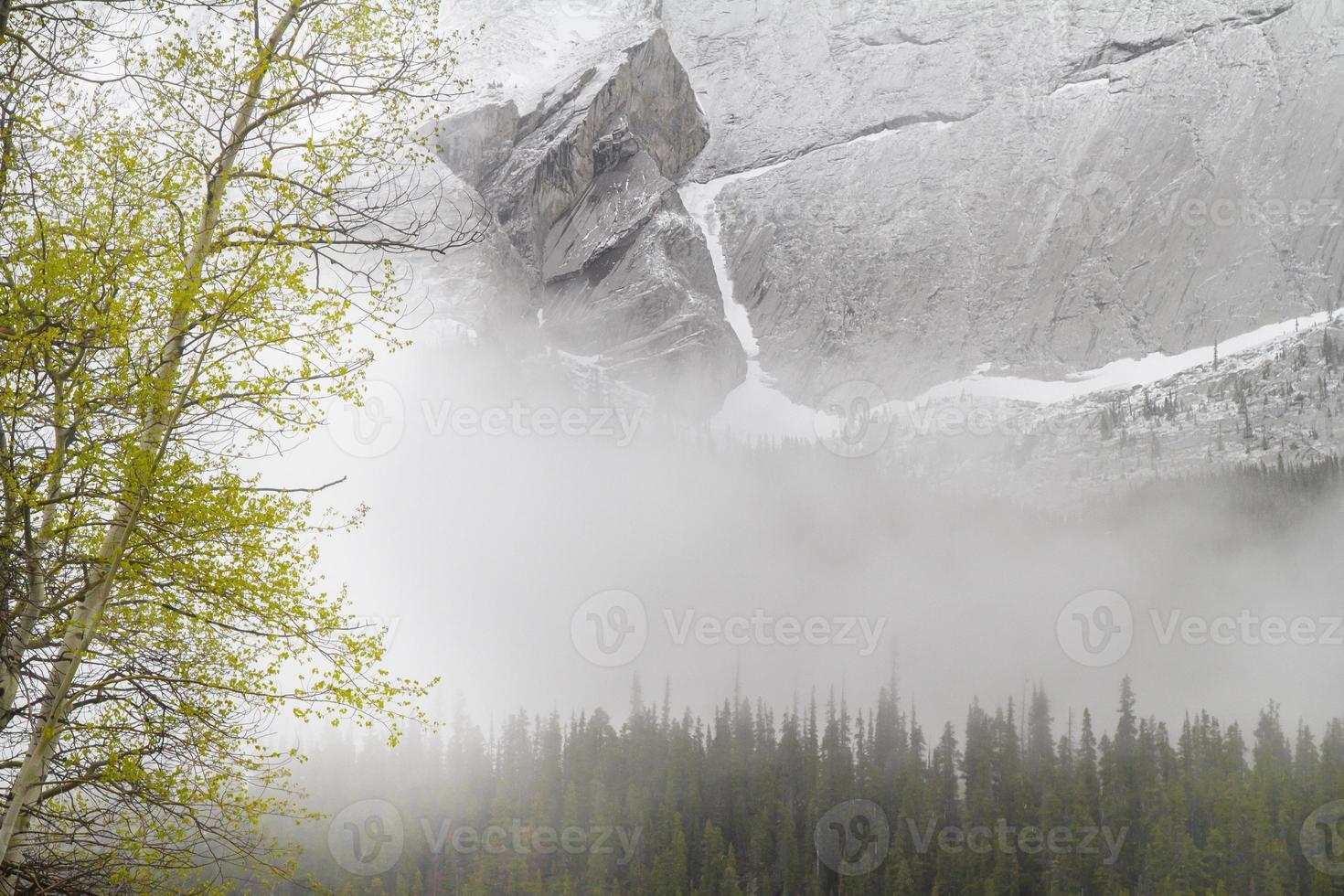Frühling und Schnee im Jaspis Nationalpark foto