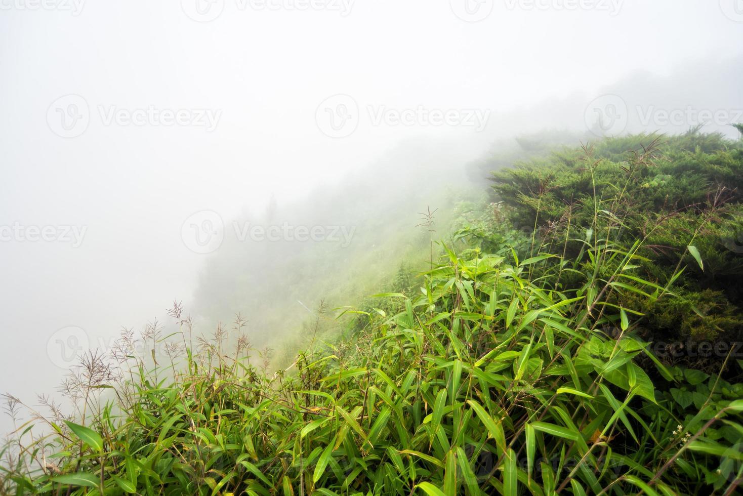 Feld mit nebligen auf Berg foto