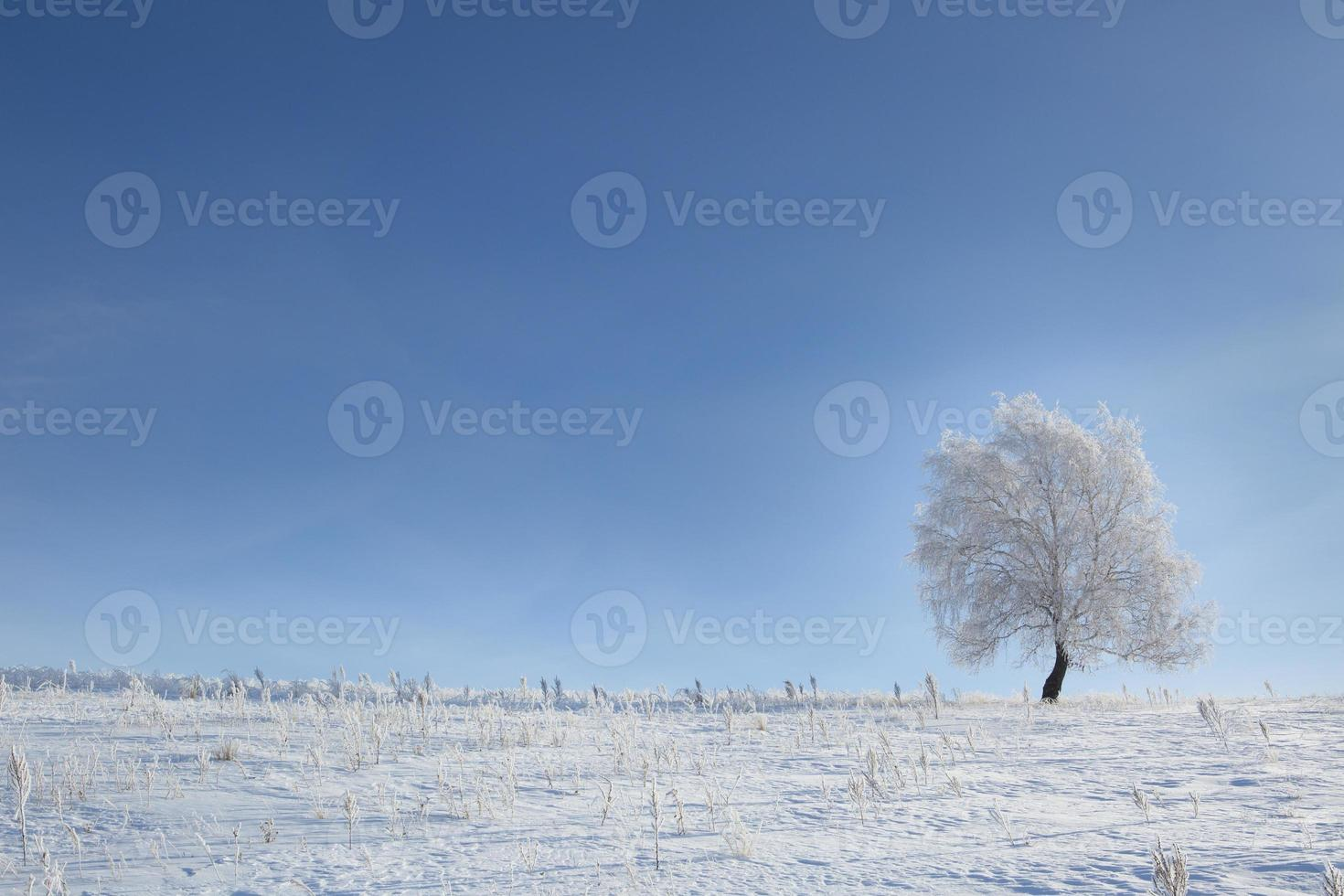 Baum im Schnee auf einem Feldwinter foto