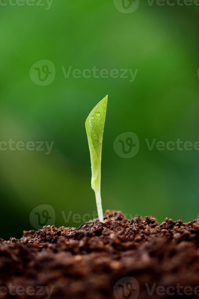 Pflanze wächst aus dem Boden foto