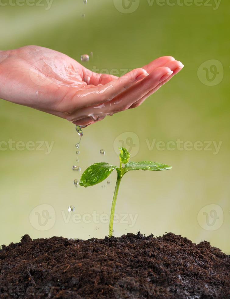 Frauenhand, die junge Pflanze wässert foto