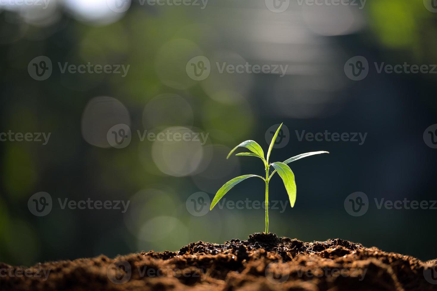 junge Pflanze foto