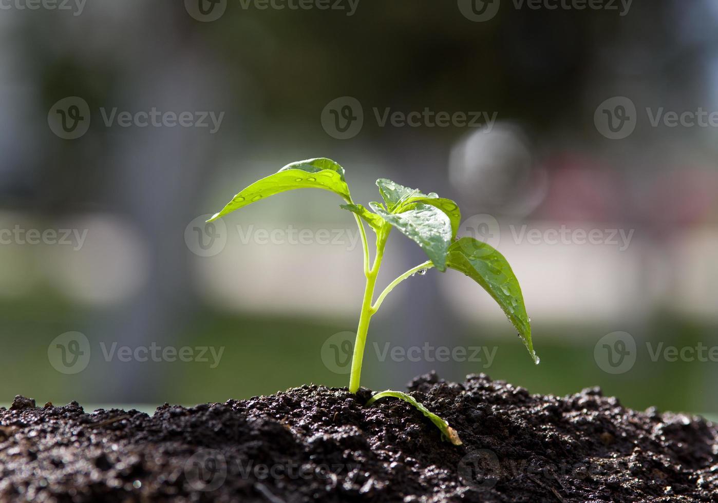 junge Pflanze wächst foto