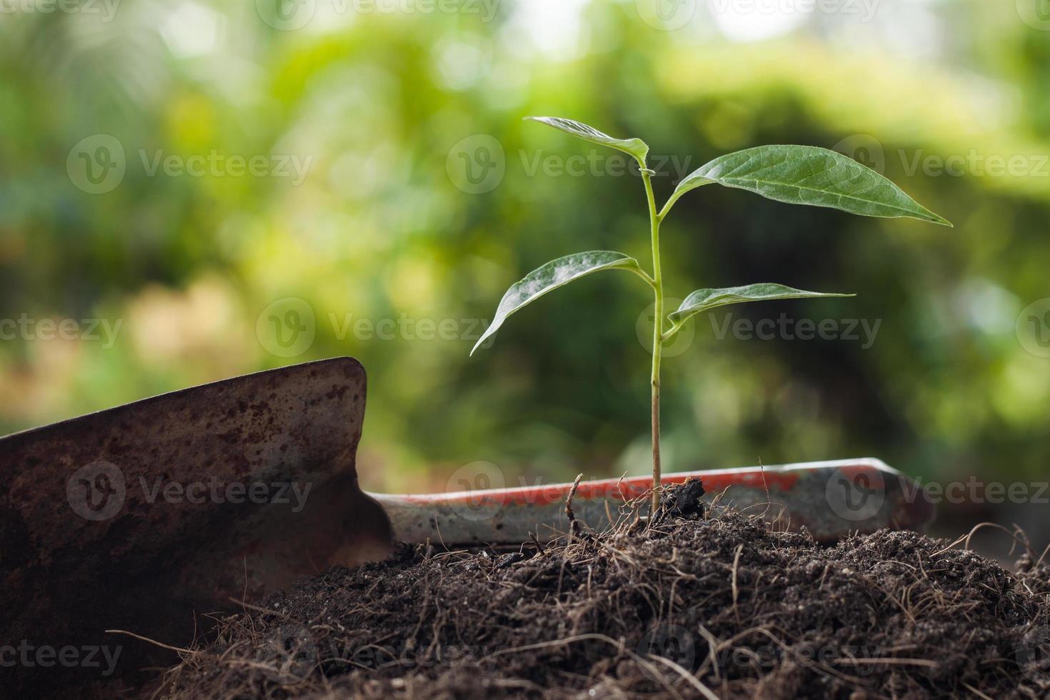 junge Pflanze wächst auf braunem Boden mit Schaufel foto