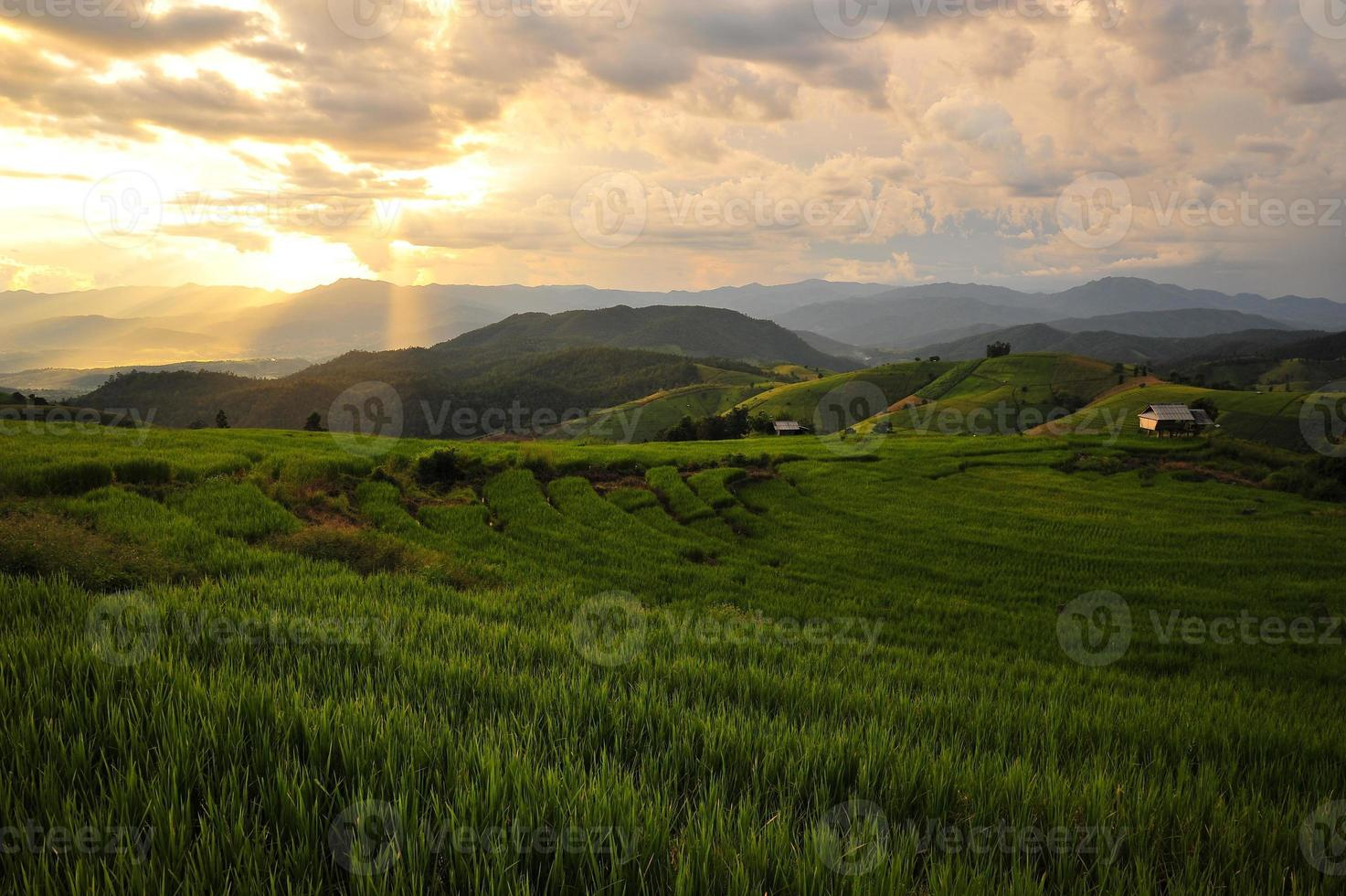 Reisfeld auf terrassierten Feldern foto